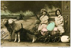 sheep cart and girls in São Miguel, Azores