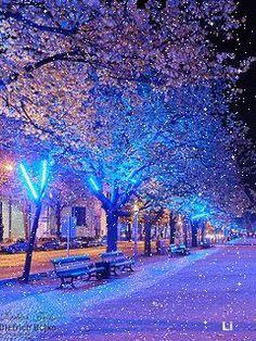 """Képtalálat a következőre: """"winter christmas snow"""" Winter Pictures, Christmas Pictures, Nature Pictures, Christmas Scenery, Christmas In The City, Christmas Lights, Christmas Christmas, Vintage Christmas, Christmas Mantles"""