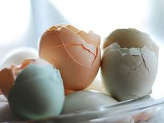 Next time you crack an egg, don't discard the empty shell. Eggshells (whether broken cleanly in half or fully crushed) can be surprisingly useful around the home.