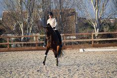 Caballo Doma Clásica Horses For Sale, Equestrian