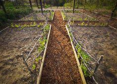 P. Allen Smith Garden Home:  Spring Peas