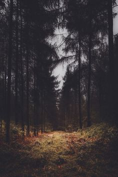 'Dark Forest' - By Freddie Ardley Photography Facebook Twitter: Forests, Dark Forest, Freddie Ardley, Ardley Photography, Nature, Dark Wood, Posts, Freddie Photography