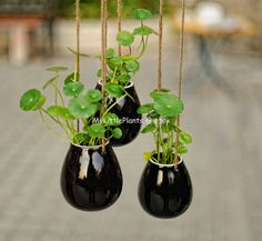 Black Egg Shape Ceramic Pottery Hanging Planter Container -- Succulent Pot…