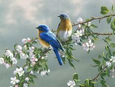 "Print ""Spring Blossom"" by Jim Hautman Size 11""X14"" / art / birds / blossom / branch / bluebird"