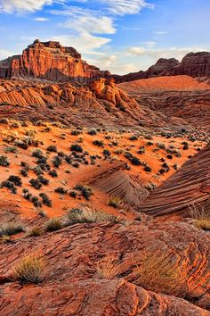 While some people think the desert is stark and dry, I think it's full of beauty....I mean look at this untouched pristine bit of earth... as far as the eye can see....