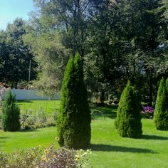 The back yard from the deck. A beautiful Michigan day.
