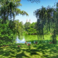 A green take of New York summer in #CentralPark. Photo courtesy of mthiessen on Instagram.