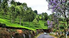 #Coonoor hill station : One of the most charming hill stations located in Nilgiri Hills, Coonoor is known for its scenic vistas, rolling tea plantations, mist-laden mountains and salubrious climate. Located just 17 km from Ooty, Coonoor is often referred to as Ooty's twin and rivals the queen of the hill station in scenic beauty.  According to folklore, Coonoor, located in Tamil Nadu, got its name from the Kurinji flowers that bloom on mountain slopes every 12 years.
