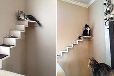 Risultati immagini per scaletta per gatti