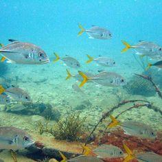 #fish #aquarium #fishtank #TagsForLikes.com #fishporn #instafish #instagood #swim #swimming #water #coral #reef #reeftank #tropical #tropicalfish #aquaria #photooftheday #saltwater #freshwater #beautiful #ocean #watertank by simonlporter