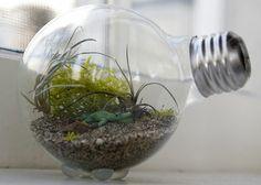 dekoideen für terrarium glühbirne