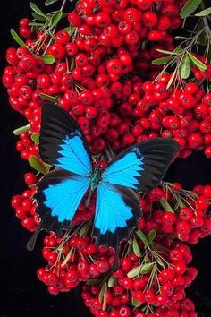 Beautiful Butterly