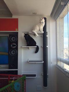 prateleiras para gatos - cozy gatos - vários tamanhos!