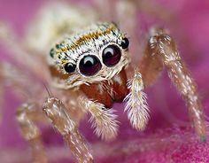 Macro fotografía. Ojos de araña. - Taringa!