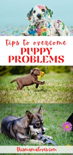 New Puppy Problems (And How To Overcome Them)A new puppy can bring you and your family a lot of joy, so weigh up the pros with the cons, and look for other ideas online to help you raise your new family addition.