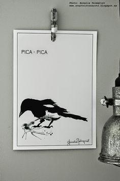 artprint, artprints, konsttryck, poster, posters, skata, skator, skatan, skatans, fågel, fåglar, svartvitt, svart och vit tavla, tavlor, tavlan, svarta, svart, vitt, vita