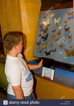 Download this stock image: Young boy views display at Butterfly Conservatory Niagara Falls Canada - A2FHF6 from Alamy's library of millions of high resolution stock photos, illustrations and vectors.