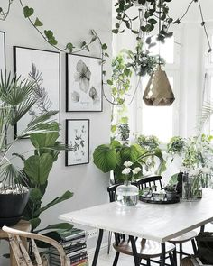 """9,841 Likes, 65 Comments - Urban Jungle Bloggers™ (@urbanjungleblog) on Instagram: """"Life is a party, dress your home like it! Can you spot the party animal? :@margo.hupert.art…"""""""