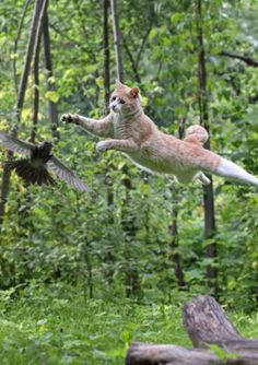 28 Flying Dogs And Cats That Will Definitely Make Your Day http://www.gossipness.com/funny/28-flying-dogs-and-cats-that-will-definitely-make-your-day-287.html