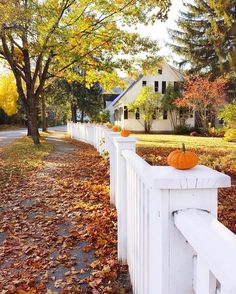 We all need a white picket fence to line baby pumpkins on top of... Happy Tuesday everyone! Well... Not sure if you watched my stories…