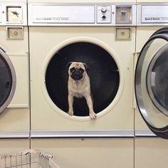 Meet Norm Dog-17