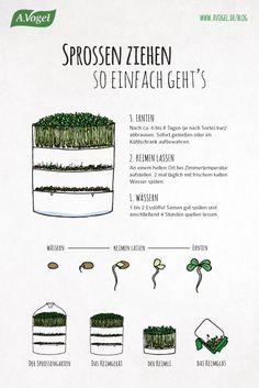 Sprossen ziehen - so einfach geht's!  #vegetarisch #vegan #sprossen #avogel