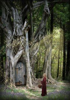 Il miglior momento per piantare un albero era vent'anni fa; il secondo miglior momento è ora.