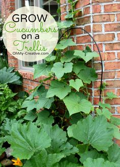 Small Space Gardening - Grow Cucumbers On A Trellis  - OhMy-Creative.com Small Gardens, Small Space Gardening, Outdoor Gardens, Cucumber Trellis, Cucumber Plant, Fruits And Veggies, Vegetables, Parsley, Gardening For Beginners