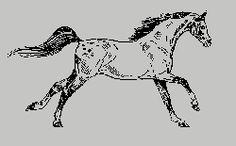 Vicces lovas képek - lovakcsakneked.qwqw.hu