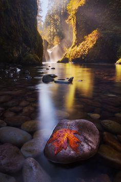 autumn leaf - Punchbowl Falls, Oregon  (by Dylan Toh on Flickr)