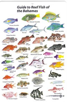 http://friendsseminarystephan.pbworks.com/w/page/25760095/One fish two fish red fish blue fish! 6J