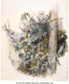 john ruskin watercolors | John Ruskin, master draughtsman!