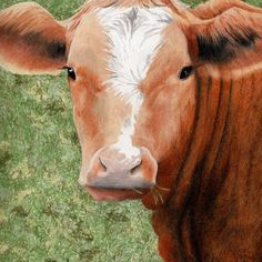 Valley Beef Beef, Animals, Art, Animales, Animaux, Kunst, Ox, Animal, Art Education