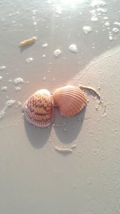Do you plan on doing some Sanibel-Captiva shelling this weekend?  We'll meet you there at sunrise. www.tween-waters.com