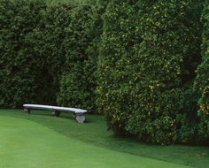 Arborvitae, to make a hedge along the road behind our house. Arborvitae, to make a hedge along the r Garden Hedges, Garden Privacy, Landscape Photos, Landscape Design, Garden Design, Evergreen Trees, Trees And Shrubs, Hedge Fence Ideas, Privacy Hedges Fast Growing