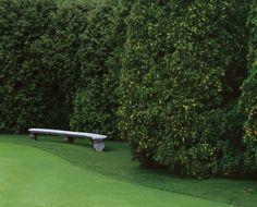 #Decorative #Hedge #Fence  Arborvitae in East Hampton,New York