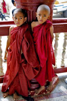 peques tibetanos