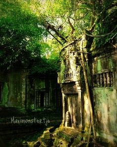 Cambodia Travel Photo  Woodland Forest  Fine Art by StudioYuki, $30.00