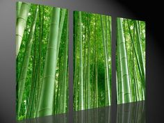 Stretched Canvas Print - MASSIVE Sunlit Bamboo Forest Large Wall Art e2387 #BestcanvasInc #Realism