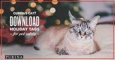 This holiday season @Purina is providing pet safety tags for giftsadorning ribbons and bows are harmful if ingested by curious cats. And watch your menu! Holiday dishes may have ingredients that are harmful for pets like raisins grapes or chocolate; keep these away from your pet. Visit the link in our bio for more tips from @Purina vet Dr. Zara! #ad [source: http://ift.tt/2hKR7sl ]