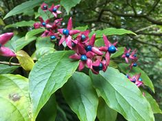 Camilla Hiley - Garden and Landscape Designer - Salisbury, Wiltshire UK Planting, Shrubs, Landscape Design, Autumn, Garden, Ideas, Shade Shrubs, Plants, Fall