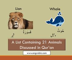 21 Animals Mentioned in Quran Holy Quran, Dog Names, Pet Birds, Holi, Verses, Insects, Lion, Elephant, Knowledge