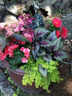 Beautiful shade container ideas                                                                                                                                                                                 More