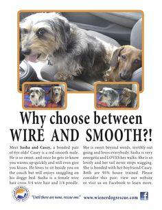 Canadian Dachshund Rescue Ontario Dachshund Rescue, Dachshund Love, Funny Animals, Cute Animals, Wiener Dogs, Beyond Words, Grumpy Cat, Animal Rights, Dachshunds