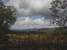 Farella Vineyard - a classic up-valley view on a fall day from this producer of cab, merlot, syrah & sauv blanc in Napa Valley's newest AVA ... Coombsville, in the southeast corner of the valley.