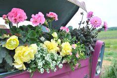 My Grace on tour! - Im nächsten Sommer tourt Grace durch Deutschland und gibt in ausgewählten Gartencentern nützliche Tipps rund um das Thema Pflege und Kombinationen von Pflanzen.
