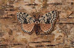 Textile Artist Ulla Pohjola Textile Fiber Art, Fibre Art, Textile Artists, Nun, Bees, Brooches, Moth, Woods, Insects