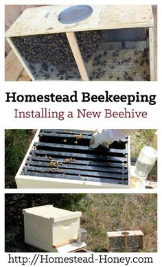 Are you thinking about adding bees to your homestead? Here's the process of installing a new beehive, from start to finish, in photos.   Homestead Honey