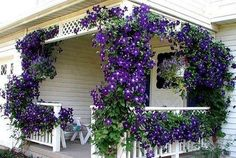 Ahhh..porch wrapped in clematis....beautiful!