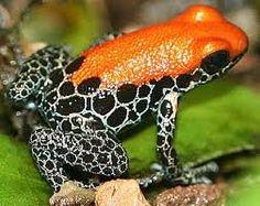 Frog with #ORANGE on his back. @neatcompany #OrangeWednesday